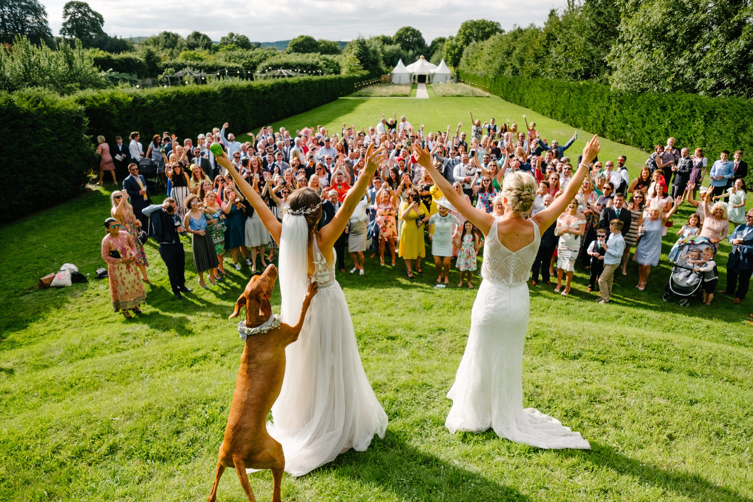 dmp0677_guests_indian_samesex_ballintubbert_house_twobrides_crowd_fun_dogs_tent_wedding